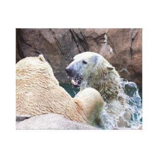 Polar Bears Roughhousing in Water Canvas Print