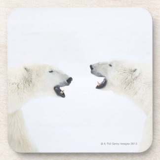 Polar Bears standing on snow after playing Drink Coaster