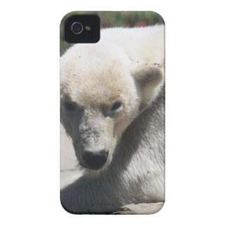 Polar Beer iPhone 4 Covers