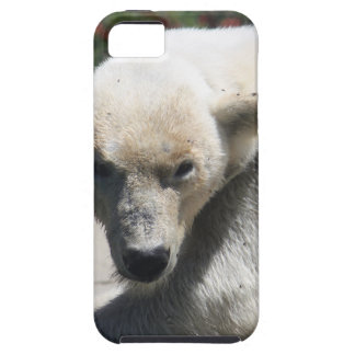 Polar Beer iPhone 5 Covers