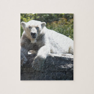 Polar Beer Jigsaw Puzzle