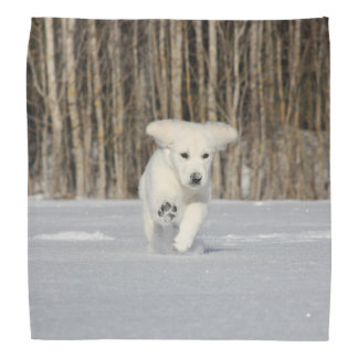 Polar Puppy Bandana