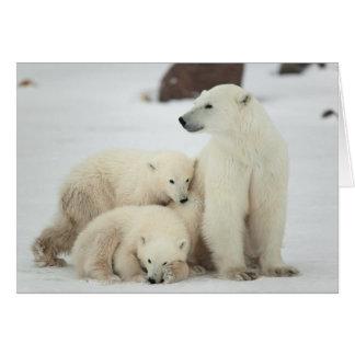 Polar She-bear With Cubs Card