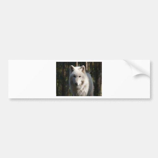 Polar Wolf Bumper Stickers