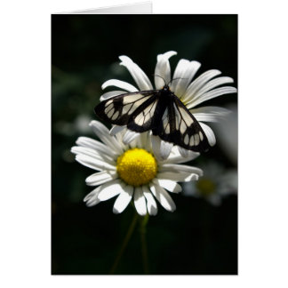 Police Car Moth and Oxeye Daisies Card