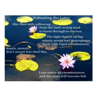 Polinating the Lotus  Postcard