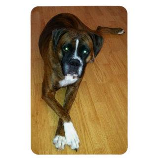 Polite Boxer Dog Photo Magnet