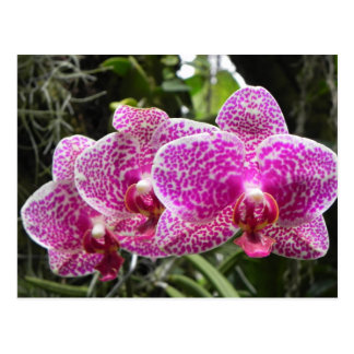 Polka Dot Orchid Post Card