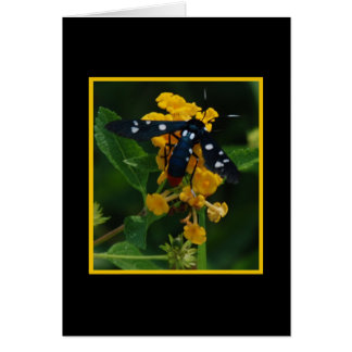 Polkadot Wasp Moth 277 Card