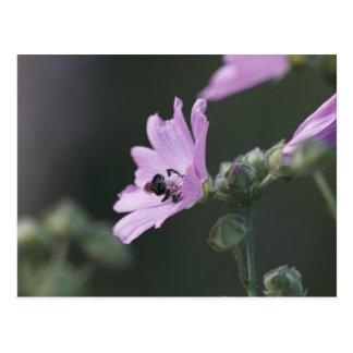 Pollen Diving Post Card
