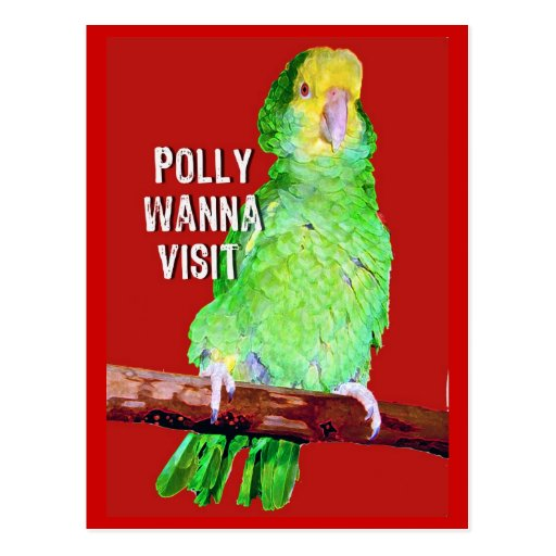 Polly Wanna Visit Appointment Reminder Card Post Card