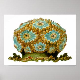 Polycyclus cyaneus Ernst Haeckel Fine Art Poster