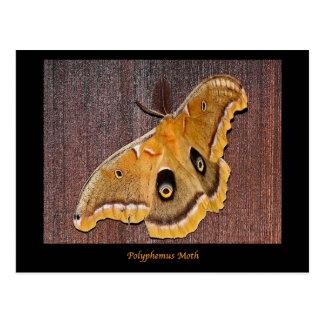 Polyphemus Moth Postcards