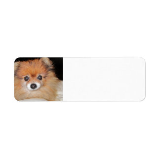 pom.png return address label