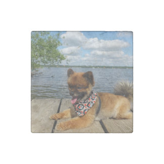 pom pup on dock stone magnet