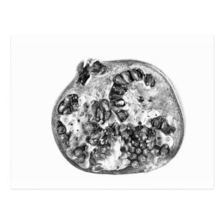 Pomegranate in Black and White Postcard