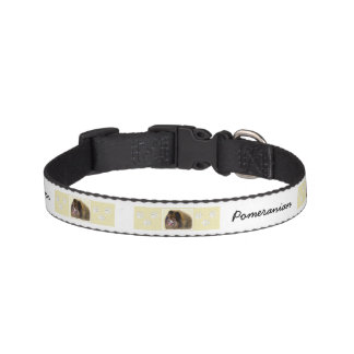 Pomeranian Black and Tan Painting Original Dog Art Pet Collar