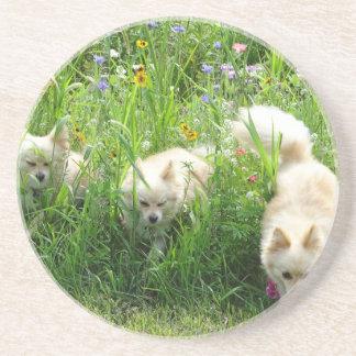 Pomeranian Coaster