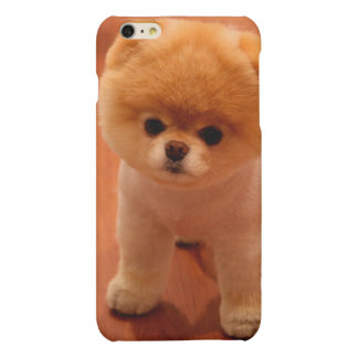 Pomeranian-cute puppies-spitz-pom dog-pom puppies