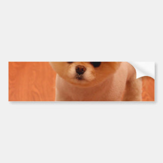 Pomeranian-cute puppies-spitz-pom dog-pom puppies bumper sticker