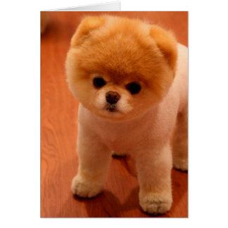 Pomeranian-cute puppies-spitz-pom dog-pom puppies card
