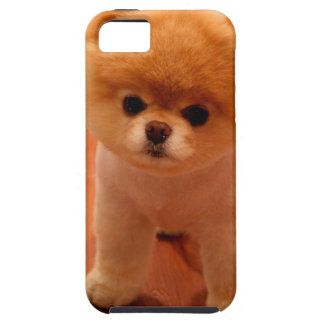 Pomeranian-cute puppies-spitz-pom dog-pom puppies case for the iPhone 5