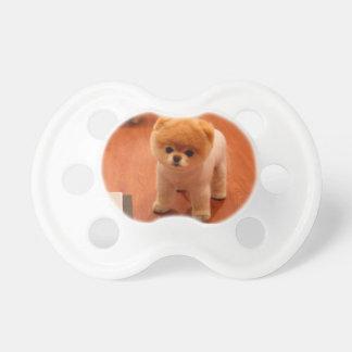Pomeranian-cute puppies-spitz-pom dog-pom puppies dummy