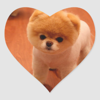Pomeranian-cute puppies-spitz-pom dog-pom puppies heart sticker