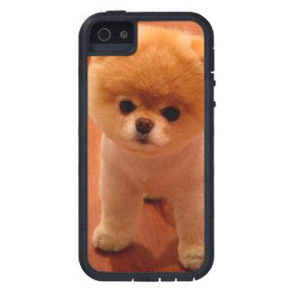 Pomeranian-cute puppies-spitz-pom dog-pom puppies iPhone 5 case