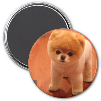 Pomeranian-cute puppies-spitz-pom dog-pom puppies magnet