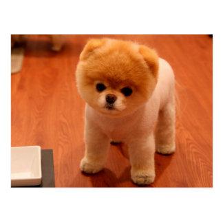 Pomeranian-cute puppies-spitz-pom dog-pom puppies postcard