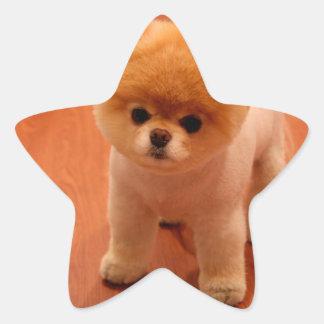 Pomeranian-cute puppies-spitz-pom dog-pom puppies star sticker
