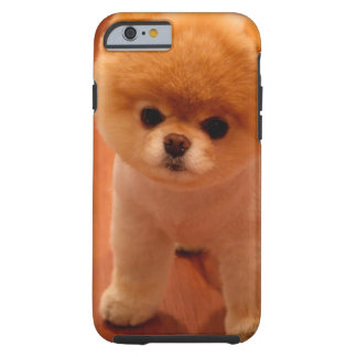 Pomeranian-cute puppies-spitz-pom dog-pom puppies tough iPhone 6 case