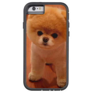 Pomeranian-cute puppies-spitz-pom dog-pom puppies tough xtreme iPhone 6 case