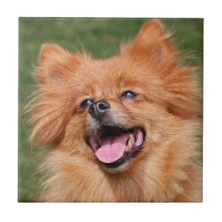 Pomeranian dog beautiful tile or trivet, gift idea