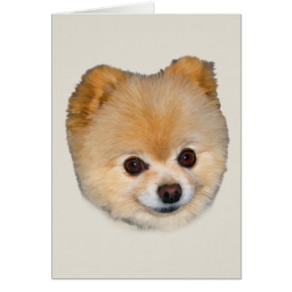 Pomeranian Dog Note or Greeting Card