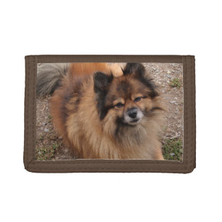 Pomeranian dog trifold wallets