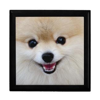 Pomeranian dwarf spitz gift box