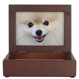 Pomeranian dwarf spitz keepsake box