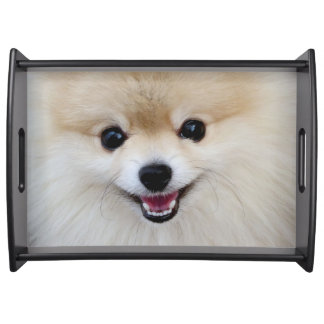 Pomeranian dwarf spitz serving tray