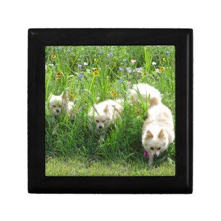 Pomeranian Gift Box