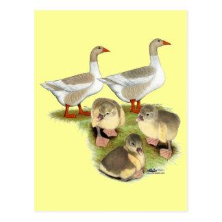 Pomeranian Goose Family Postcard