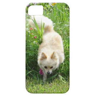 Pomeranian iPhone 5 Cover
