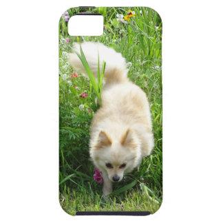 Pomeranian iPhone 5 Covers
