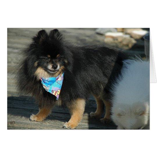 Pomeranian Party Attire ~ Birthday Card
