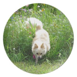 Pomeranian Plate