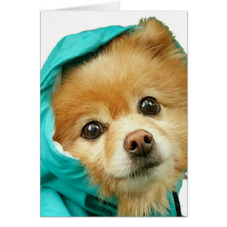 Pomeranian Raincoat # Card
