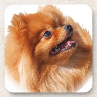 Pomeranian Spitz Coaster