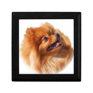 Pomeranian Spitz Gift Box
