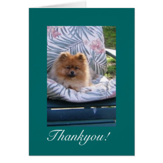 Pomeranian Thank you Note Card